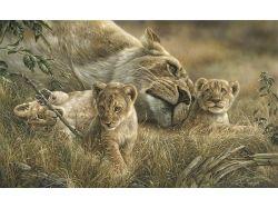 Рисунки карандашом диких животных
