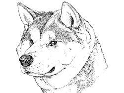Рисунки карандашом диких животных 2