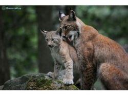 Смотреть картинки животных бесплатно 2