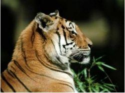 Смотреть картинки животных бесплатно 5