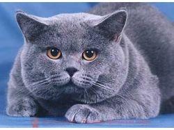 Картинки черные котята 1