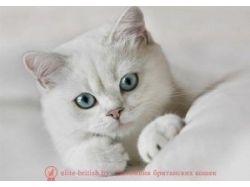 Картинки черные котята 5