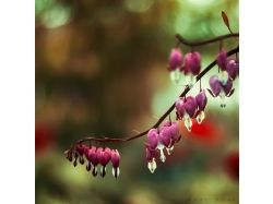 Цветы нежные фото 1
