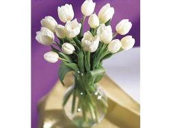 Цветы нежные фото 2