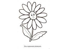 Картинки раскраски цветы ромашки