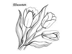 Картинки раскраски цветы ромашки 7
