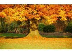 Картинки золотая осень 1