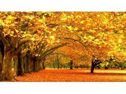 Картинки золотая осень 2
