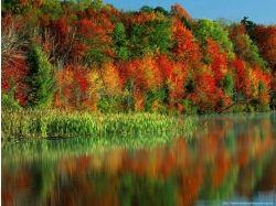 Картинки золотая осень 3