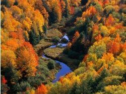 Картинки золотая осень 4