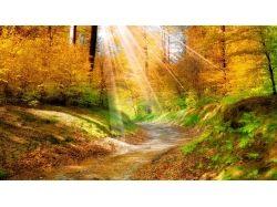 Картинки золотая осень 5