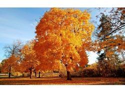 Картинки золотая осень 6