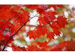 Картинки золотая осень 8