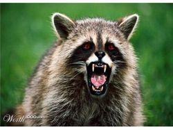 Страшные животные фото 1