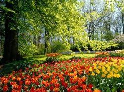 Красивые картинки с цветами 5