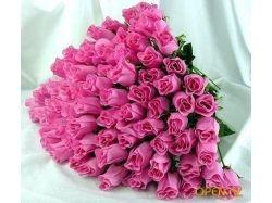 Красивые картинки с цветами 8