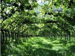 Арки для винограда фото 3