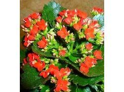 Комнатные цветы цветущие фото и названия 1