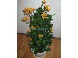 Комнатные цветы цветущие фото и названия 3