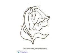 Комнатные цветы цветущие фото и названия 6