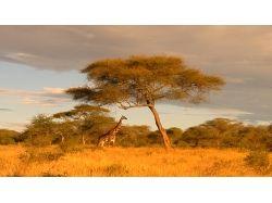 природа и животные африки фото
