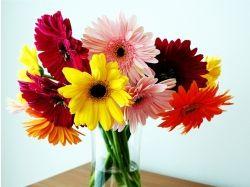 Цветы в вазах фото
