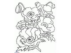 Раскраски цветы букеты 2