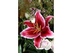 Раскраски цветы букеты 8