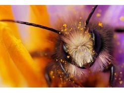 Фото насекомые 2