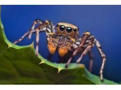 Фото насекомые 3