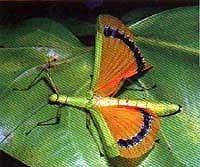 Фото насекомые 4