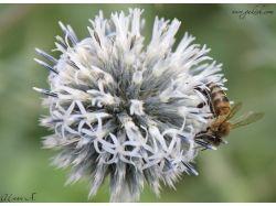 Фото насекомые 5