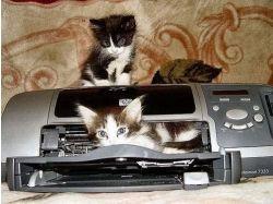 Картинки прикольные котята