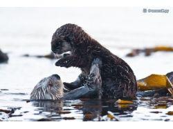 Забавные фотки животных 9