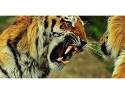 Фотографии пантеры