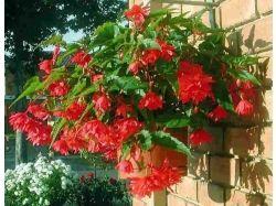 Цветы красные фото