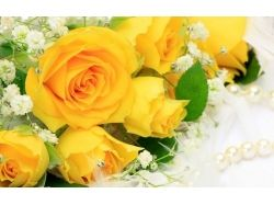 Фото красивых цветов роз