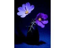 Фото два цветка