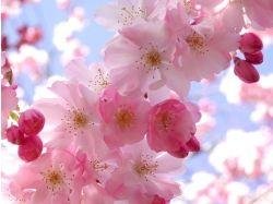 Обои на рабочий стол весна природа