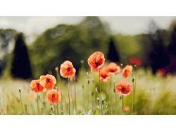 Картинки на рабочий стол красивые цветы