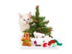 Новогодние котята на рабочий стол