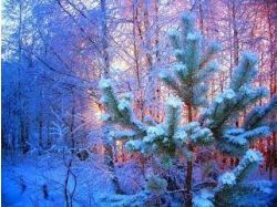 Новогодняя природа