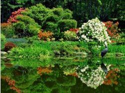 яндекс фото природа