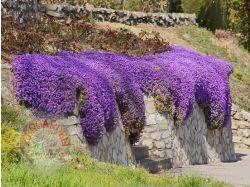 Название цветов для сада