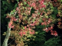 Картинки япония природа