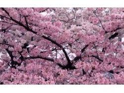 Фото природа онлайн