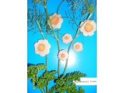 Фантазия цветы
