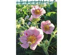 Семена цветов каталог
