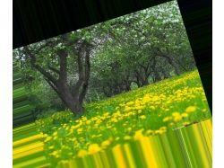 Картинки на заставку природа