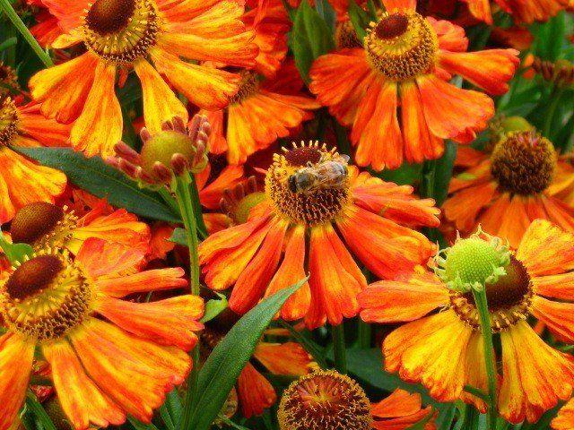 Пчелы схема сборки